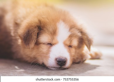 close up of Puppy sleeping on bright background with warm sun light.