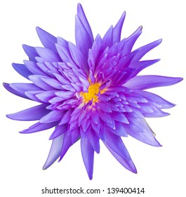 Close up purple color blooming water lily or lotus flower isolated on white - with path