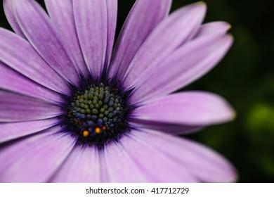 close up purple flower