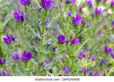 close up of purple and green plant