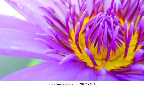 Close up of a purple water lily bloom with some water-drop