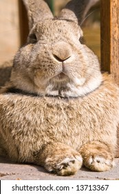 close up of a rabbit looking like he's the boss