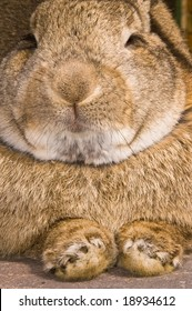 close up of a rabbit in resting mode