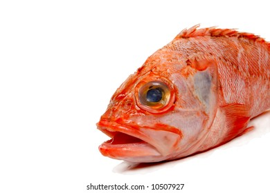 Rad Fish Images Stock Photos Vectors Shutterstock