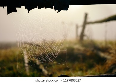 Close up rain drop on the spider web in sunrise autumn background