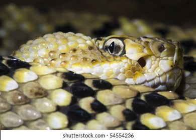 close up of rattlesnake