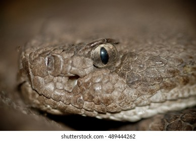 Close up of rattlesnake face