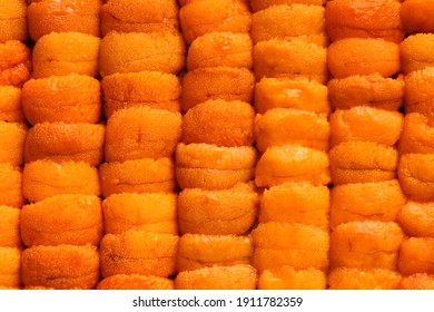 Close up raw fresh sea urchin or Uni, Sushi and Sashimi ingredients. popular Japanese tradition food.