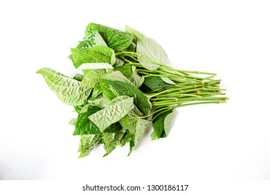 Close up raw freshness vegetable Piper Samentosum, a plant in the Piperaceae family used in many Southeast Asian cuisines ,in Thailand call cha-plu,  young leaves eatable,