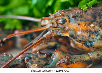 Close up of a raw lobster head.