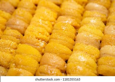 Close up raw roe sea urchin, Uni sushi or sashimi ingredients, Japanese style