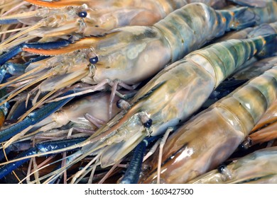Close up of raw shrimps, Giant freshwater prawn in Thailand.
