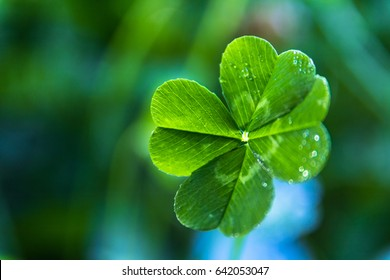 close real green 4leaf clover 260nw
