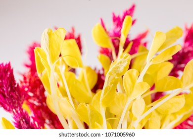 Close up of Red Amaranth strain and Golden Pea Tendrils in bundle on white background. Fresh micro greens edible flower salad ingredient or garnish.