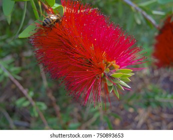 a close up of a red blossom