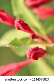 Close up of red budding flowers in a green environment