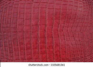 Close up of red burgundy Crocodile,Alligator belly skin texture use for wallpaper background.Luxury Design pattern for Business and Fashion.Top view surface in backdrop.