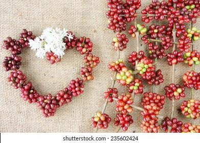 Close up of red coffee bean, agriculture product of Vietnam,  cafe bean in bamboo basket on sackcloth background, amazing heart shape with fresh ripe berries in vibrant colors