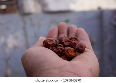 Close Up of Red dried jujube in hand also known as Chinese date, ber, Chinee apple, jujube, Indian plum, Regi pandu, Indian jujube, dunks (in Barbados) and masaualso
