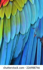 Close up of Red and Green winged Macaw feathers