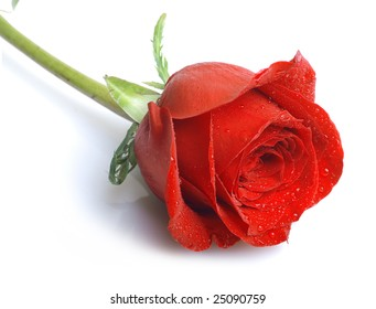 Close up of red rose