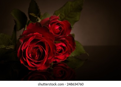 Close up of red rose in dark background.