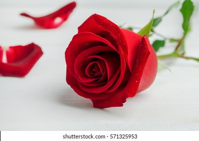 d706f6acd Close up of red rose flower with rose petals on white wooden background