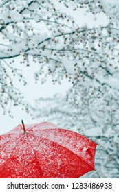 Close up of red umbrella in snow with frost and snowflakes