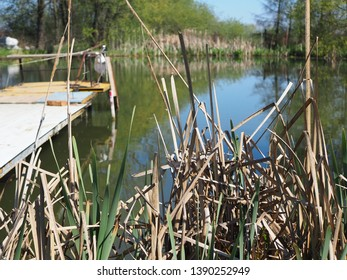 Close up of reeds against water. Nature background with lake