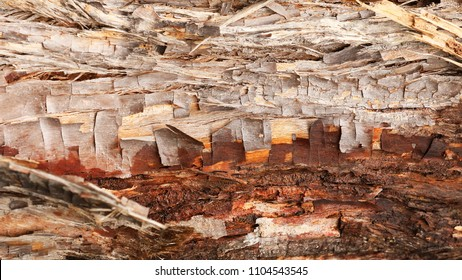 close up of richly textured bark peeling away from the tree in interesting cube like sections revealing fine lines and textures. Reminiscent of an abstract outback landscape