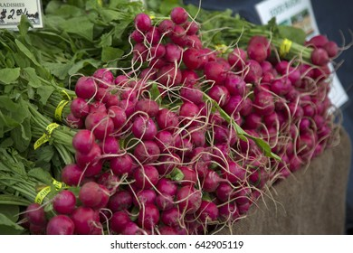 Close Right Angle View of Fresh Organic Red Radishes Green Tops, Burlap Tablecloth,  Local Farmers Market,  Background Backdrop Use with Text Copy Space Overlay (HDR Image) - Eugene, Oregon, USA