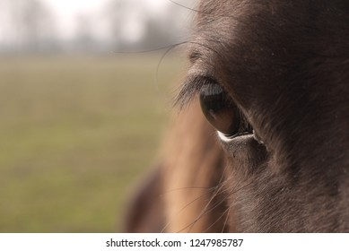Close up of the right eye of a horse. Front view, space for text at the left side of the photo