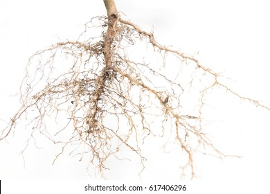 Close up of roots tree