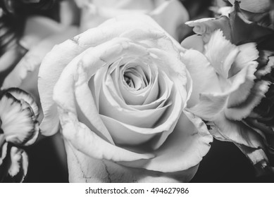 Close up rose in black and white tone.