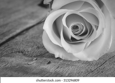 close up of rose on wooden board