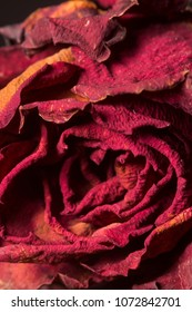 close up re roses