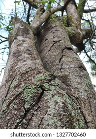 Close up of the rough and crack tree skin.