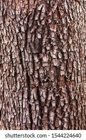 Close up of rough tree bark