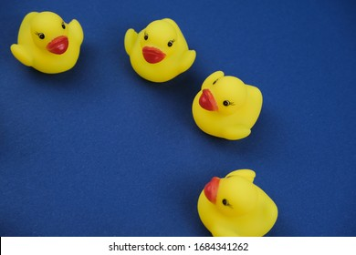 Close up of a rubber duck on the royal blue background.