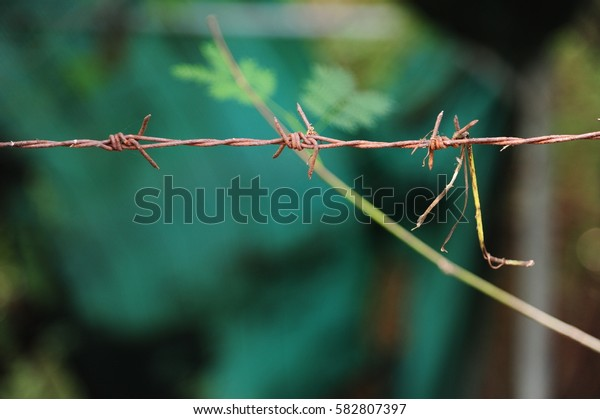 Close up rusty barbed wire