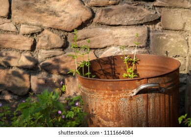 Close up of a rusty bin with weeds growing in it in front of a stone wall
