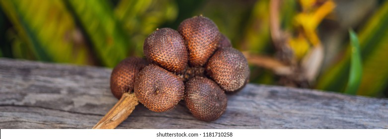 Close up Salak fruits on wood table,Thai and Indonesian local fruits BANNER, long format