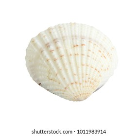 Close up Scallop seashell isolated on white background,clipping path included