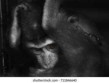 close up scared monkey black and white