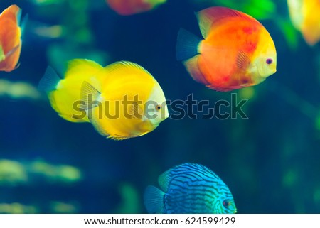 Close School Yellow Red Blue Fish Stock Photo Edit Now 624599429