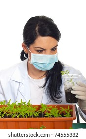 Close up of scientist woman examine new leafs of tomato in soil in laboratory