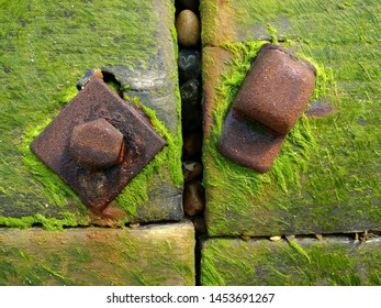 Close up of sea wall on coastal barrier in wood bolted together with large bolts and nuts turned brown rust colour in the salt water  with vibrant green moss seaweed growing and clinging with stones