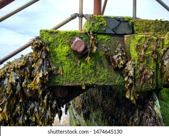 Close up of sea wall sea weed plant growing coastal barrier in wood bolted together with large metal bolts nuts turned brown rust colour in salt water  with vibrant green moss  clinging with stones