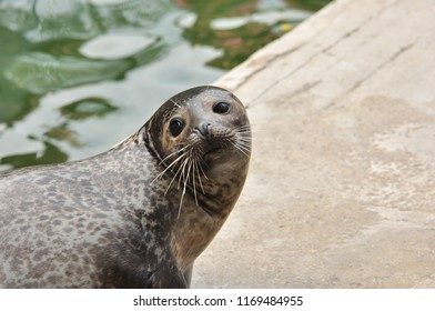 Close up of a seal with nice face visible.