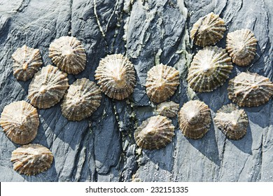Close up of seashells on rocks